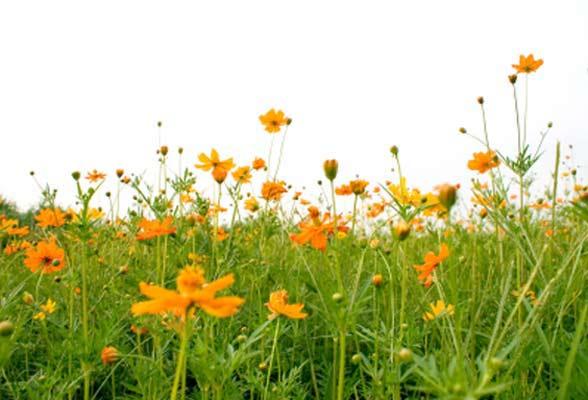 spring-588x400.jpg