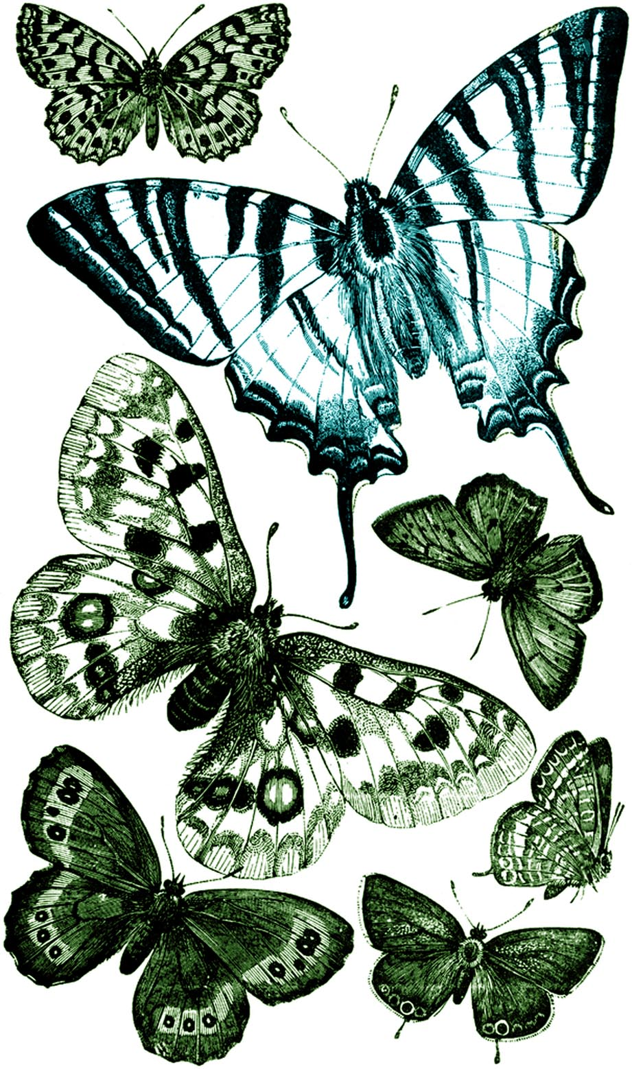 free vintage butterfly clipart - photo #19