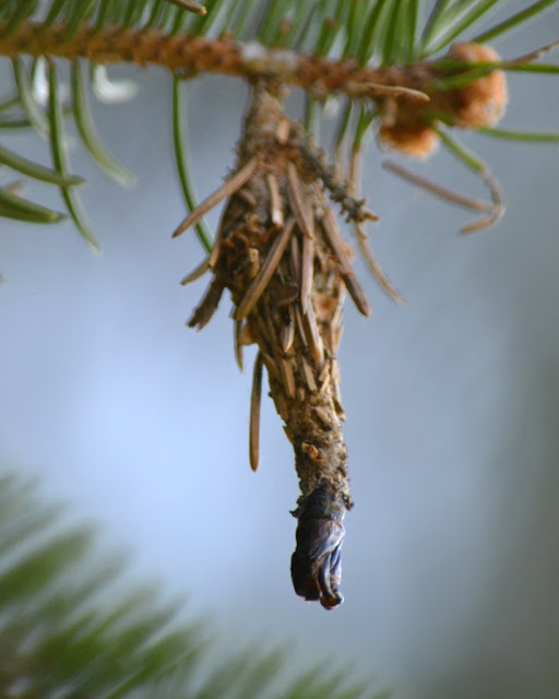 cocoon-like silk bag of bagworm