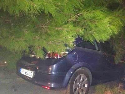 Μη εφαρμογή σχετικών διατάξεων σε αίτημα αποζημίωσης λόγω πτώσης δέντρου σε σταθμευμένο όχημα