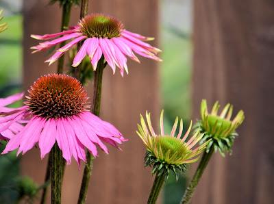 photo of garden by Nancy Zavada