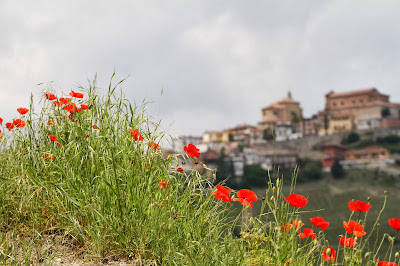 Poppies and View of La Morra