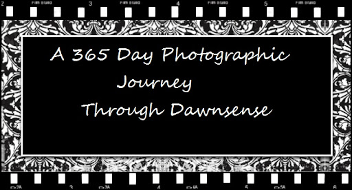 A 365 Day Photographic Journey Through Dawnsense