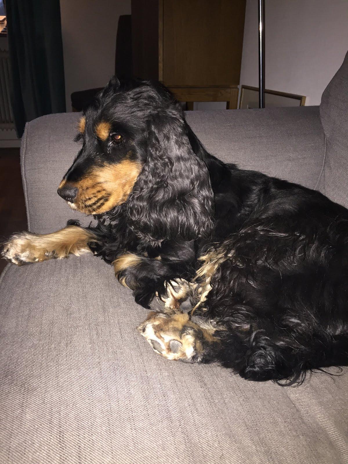 Ellies favoritplats i soffan