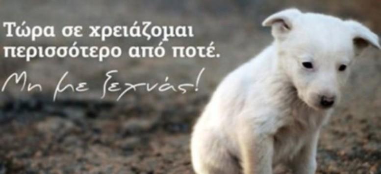 4 Οκτωβρίου Παγκόσμια ημέρα Ζώων