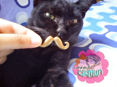 cik tam, bangun tidur, terjage, kucing, kucing hitam, comel, mustache, misai,