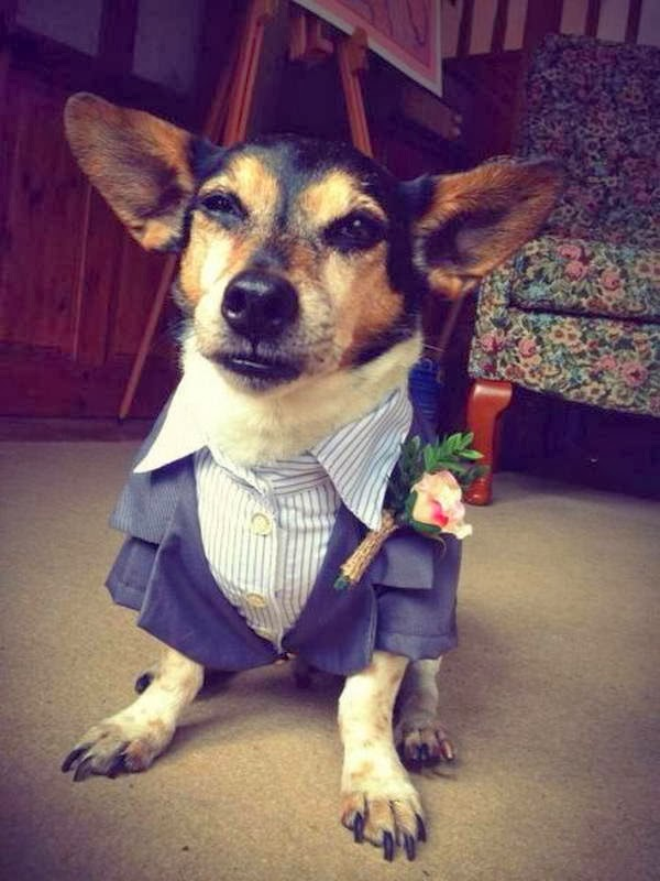 Cute dogs - part 7 (50 pics), dog wears suit with flower