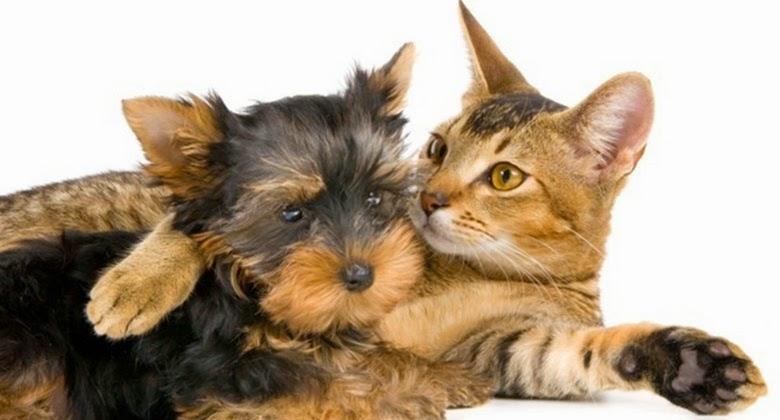Kucing Ternyata Punya Perasaan Jika Kehilangan Sahabatnya