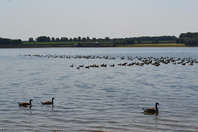 rutland water scenery