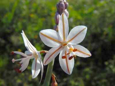 Forever wedding planner il significato dei fiori dalla a for I fiori della balsamina