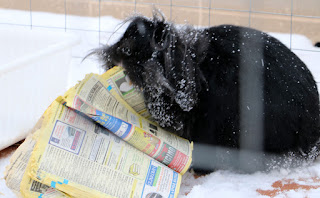 Playing with her yellow pages in the snow