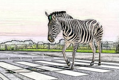 Zebra on a zebra crossing