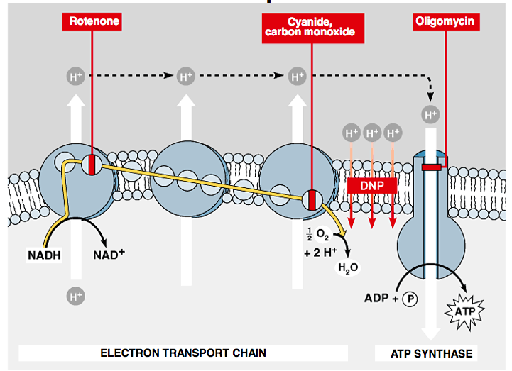 3 Energy Photosynthiesis And Respiration Mrs