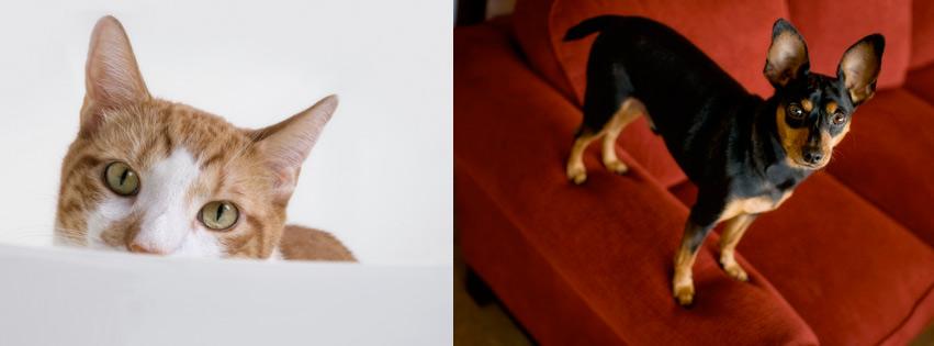 Az Pet Professionals