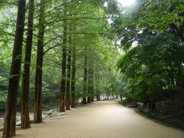 천우폭포 숲길