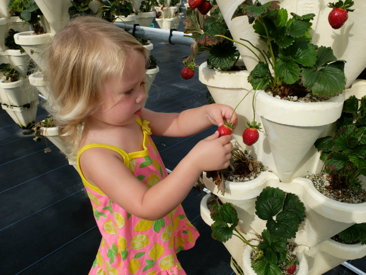 Sweet Turtle Soup: Spring Bucket List - Pick Strawberries