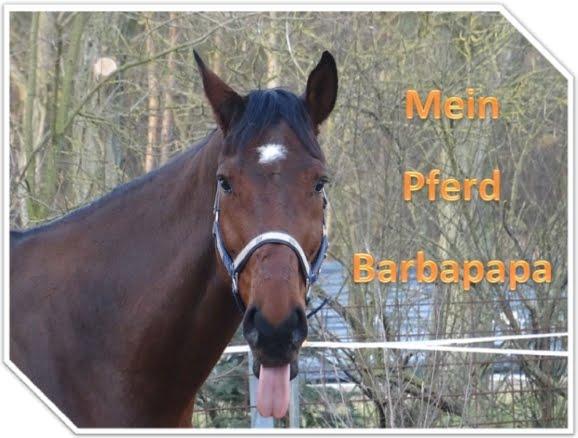 Mein Pferd Barbapapa