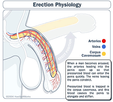 Erectile Dysfunction - Cleveland Clinic Center for