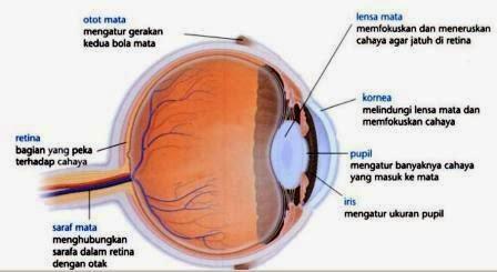 Bagian Bagian Mata dan Fungsinya