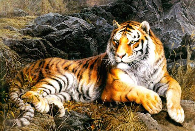 Le Vieil Homme et le Tigre