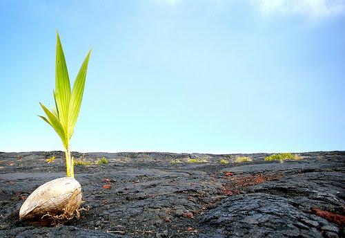 Growth, goals, hope, happiness, change, ptsd, post traumatic growth, trauma, plants, seeds, lava, green