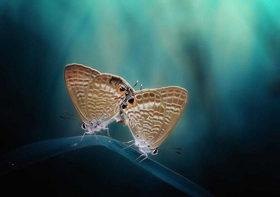 mariposas+dos.jpg
