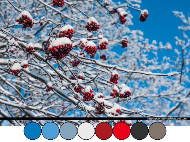 Colour palette winter rowan