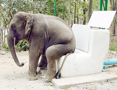 elephant funny picture for facebook