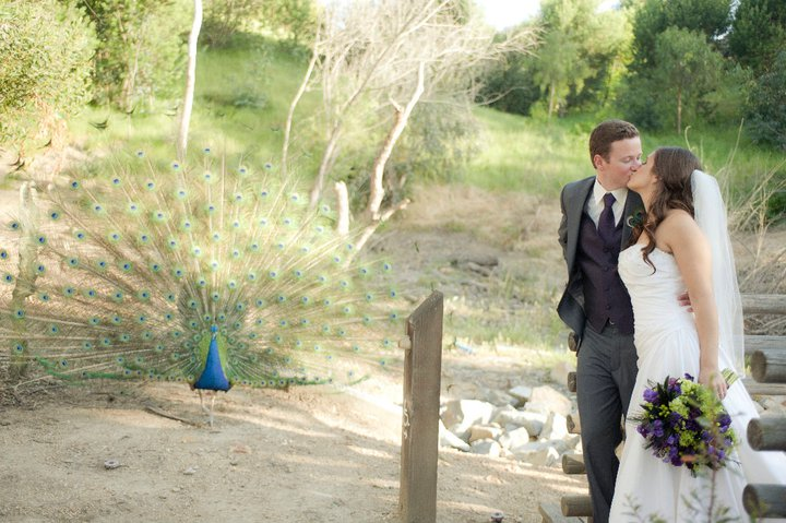 Leo Carrillo Ranch Amy and Jeff 39s peacock inspired wedding LOVE