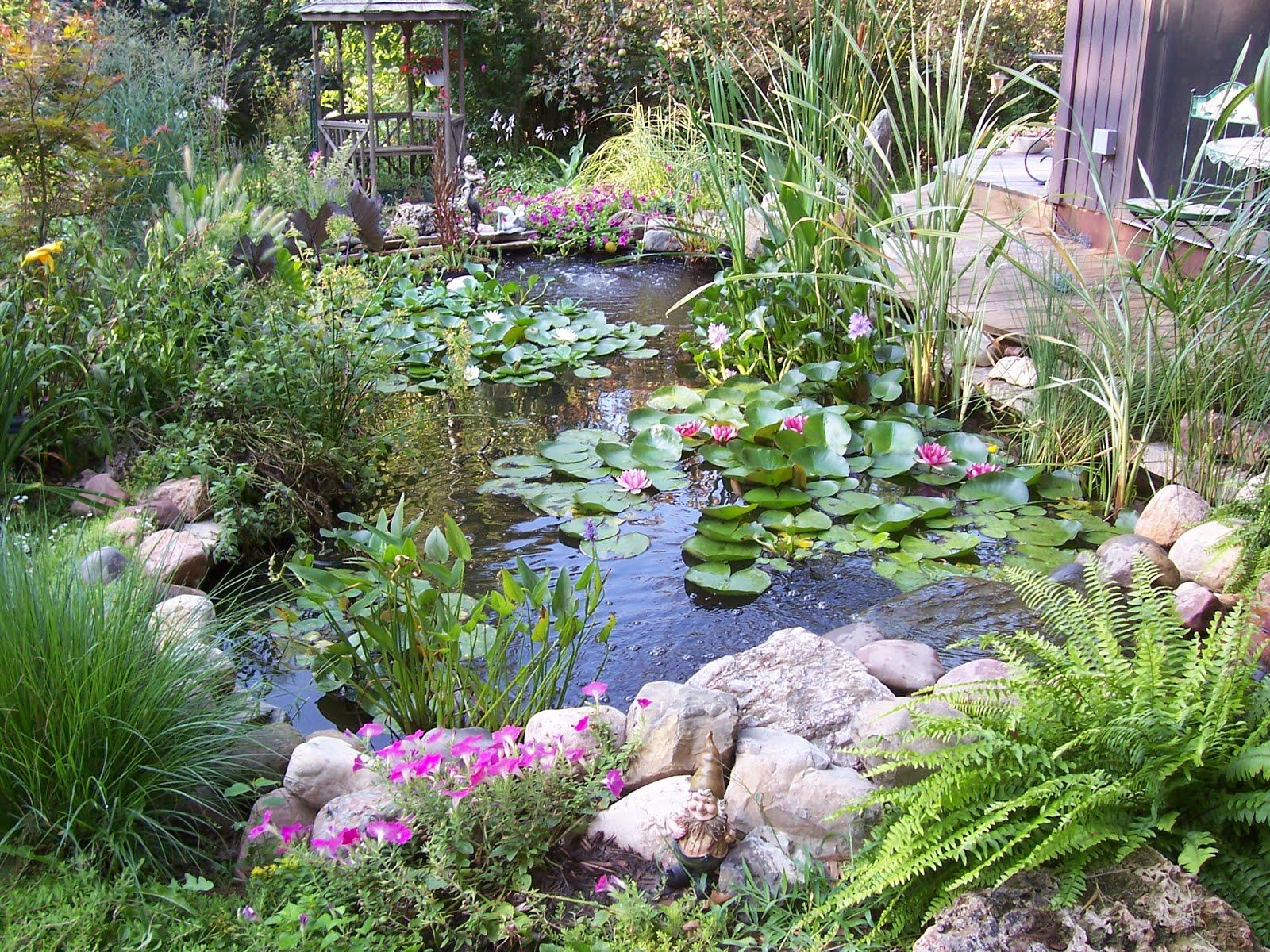 Garden beauty for Garden pond depth