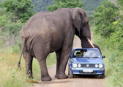 gambar binatang terkuat di dunia