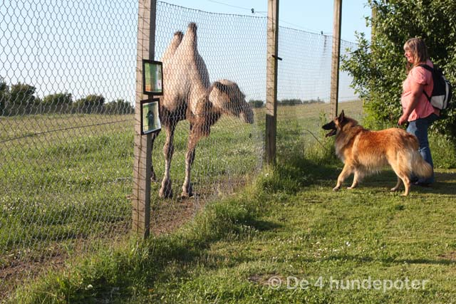 Woman søger mand Lintrup zoo