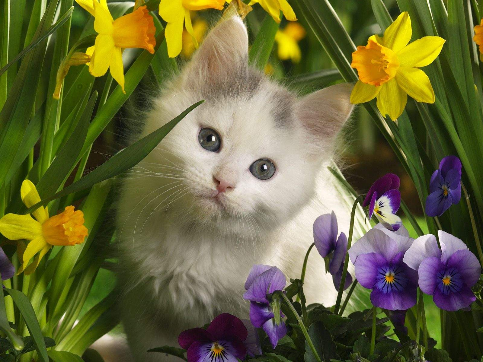 Cute cats 3