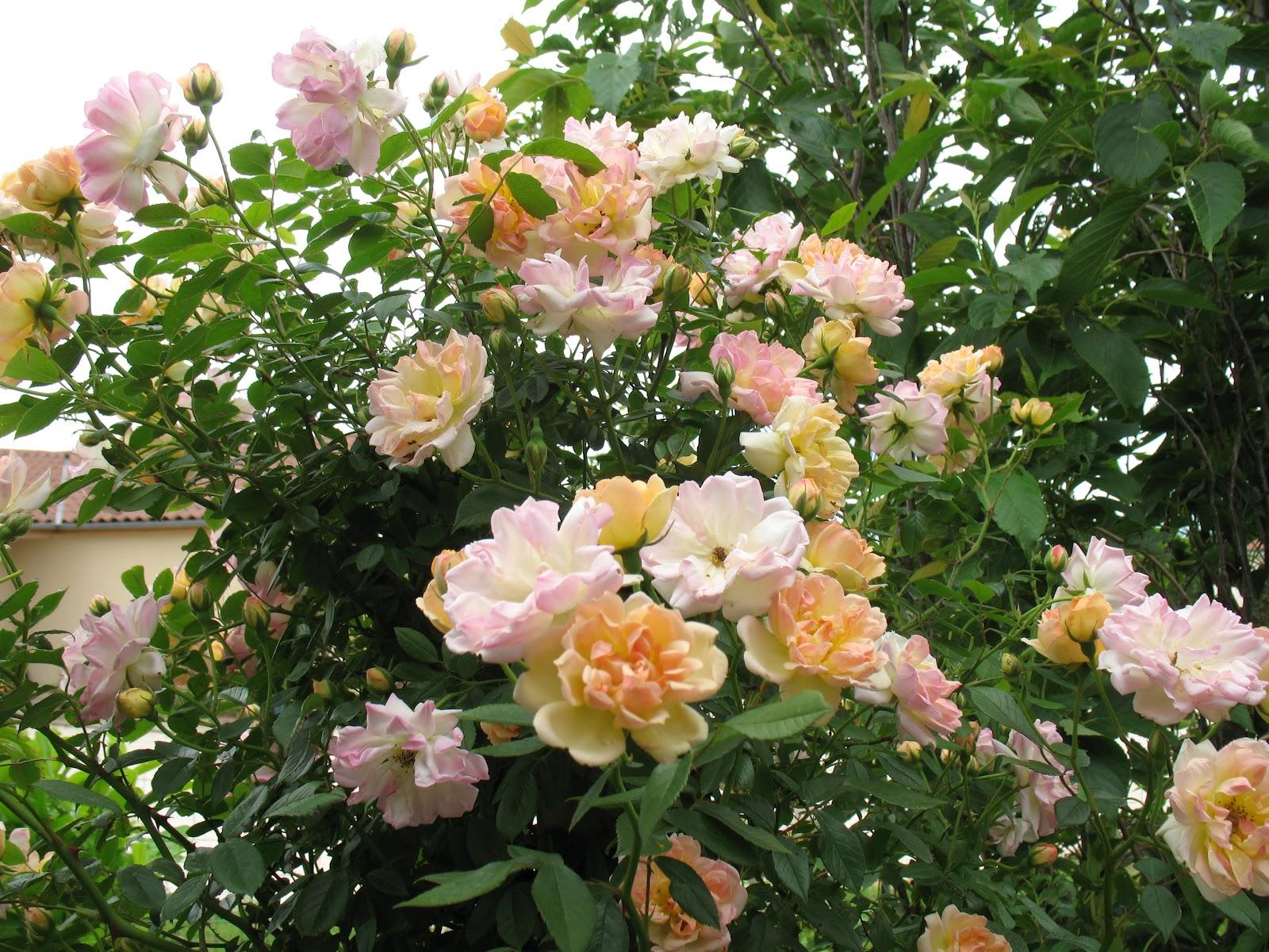 Bon Dimanche Beaux+bouquets