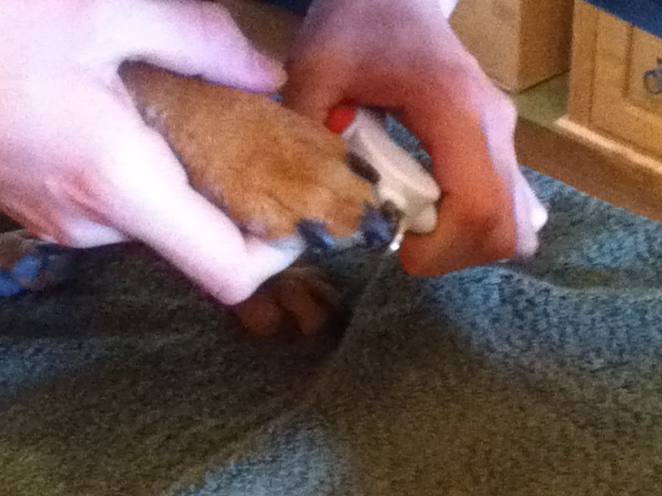 how to hold dog while clipping nails