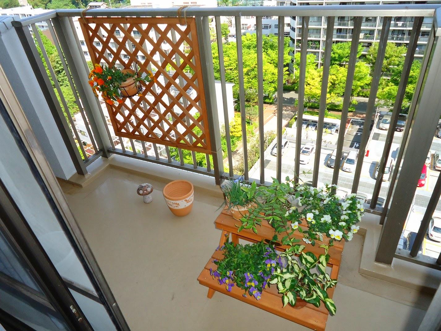 ビオラ (植物)の画像 p1_26