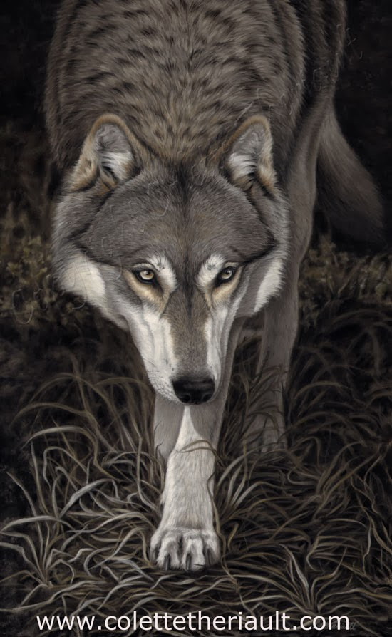 Grey Timber Wolf Painting in Pastel by Canadian Wildlife Artist Colette Theriault