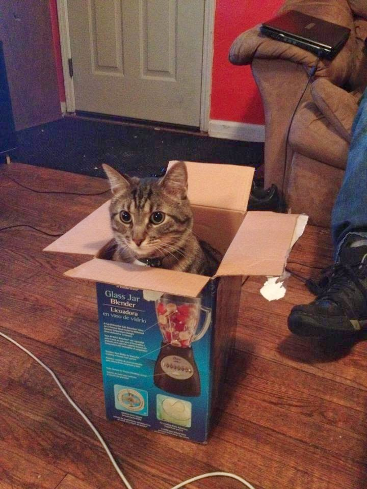 Funny cats - part 95 (40 pics + 10 gifs), cat pictures, cat sits in blender box