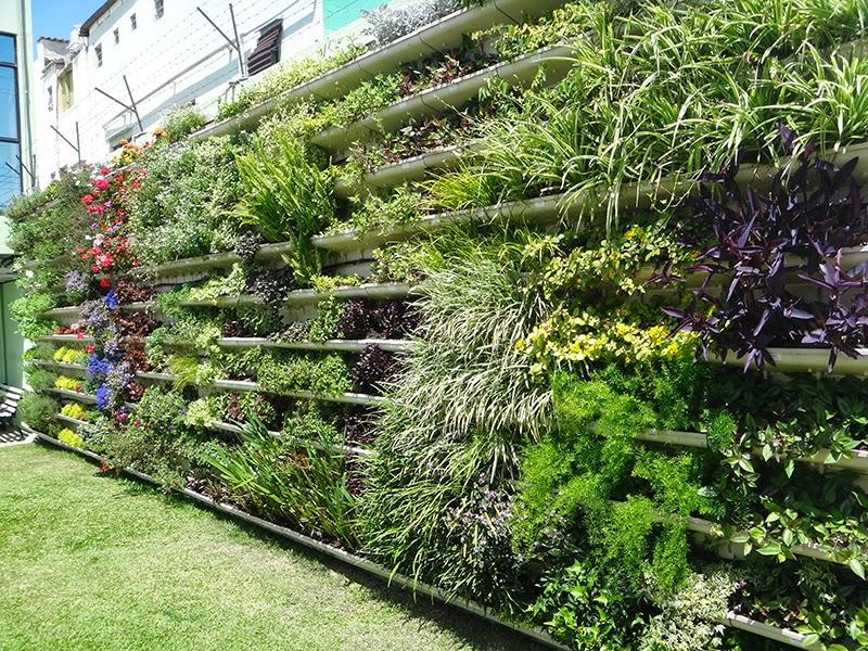 jardim vertical no sol:Blog PlastPrime: Como escolher as plantas para o seu jardim vertical