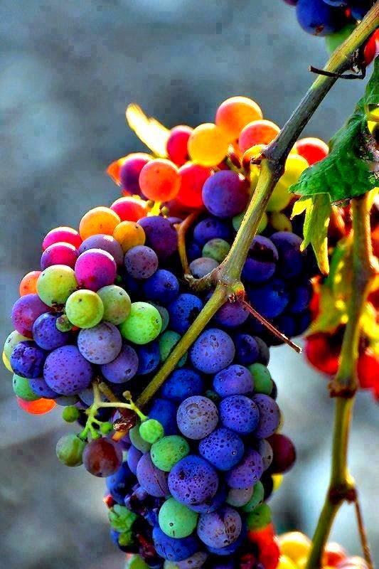 Rahsia Disebalik Warna Buah Dan Sayuran
