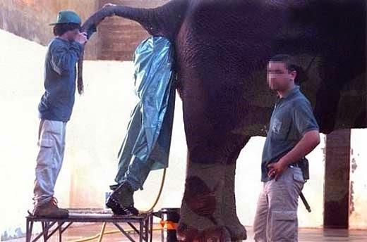 smešna slika: loš posao u zoološkom vrtu