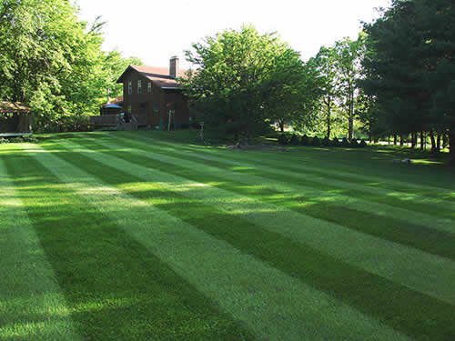 Landscaping With Bermuda Grass : Home garden and landscaping components of