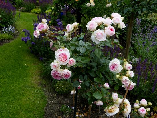 promesse de roses meilland nouvelles roses automne 2015. Black Bedroom Furniture Sets. Home Design Ideas