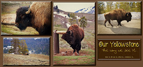 Our Yellowstone