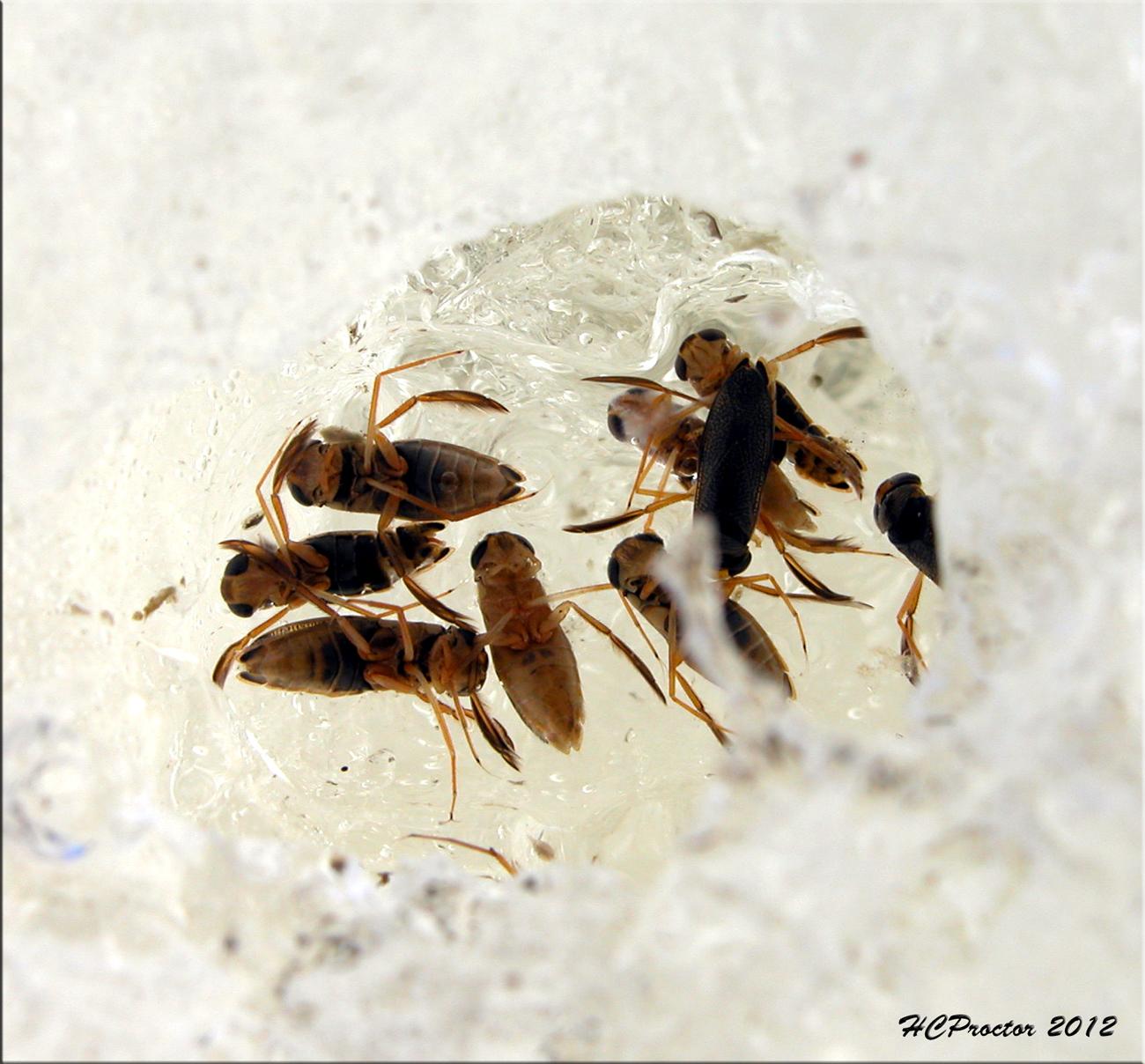 the home bug garden friday bug ice boatmen. Black Bedroom Furniture Sets. Home Design Ideas