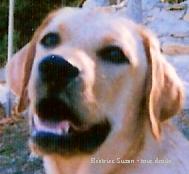 Un chien, c'est pour la vie et non pour une envie !