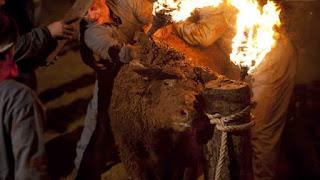 Ayuntamiento de Zaragoza no financiará ni colaborará con los festejos en los que haya maltrato animal