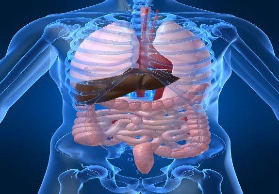 Porqué se le da tanta importancia a la limpieza de colon?