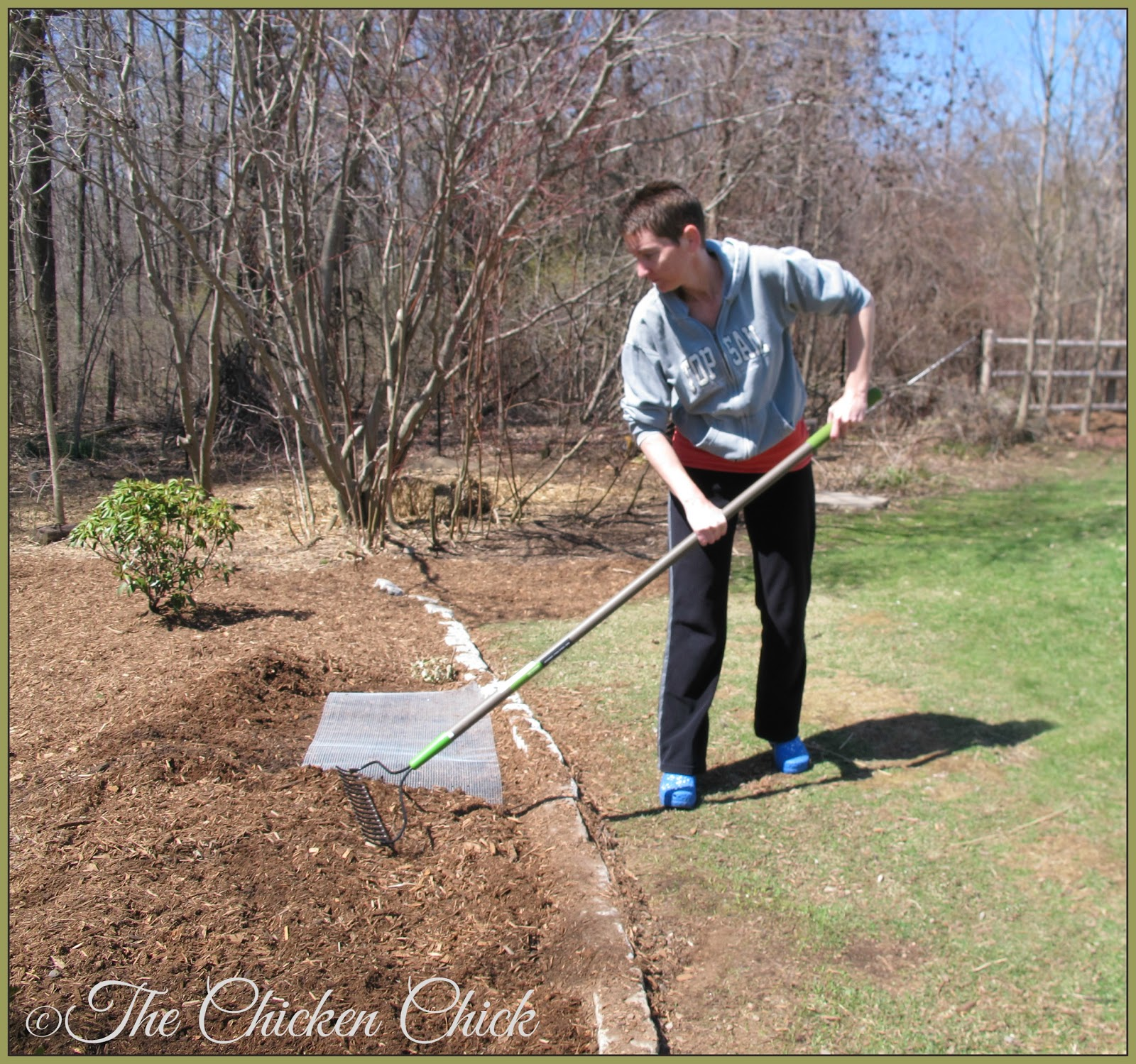 Rake mulch on top of hardware cloth to keep chickens out of certain flower beds.