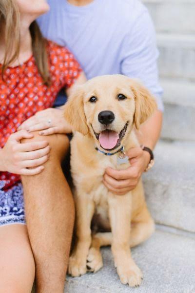 The Cutest Puppy Golden Retriever Beautiful